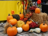 Fall Pumpkin Display